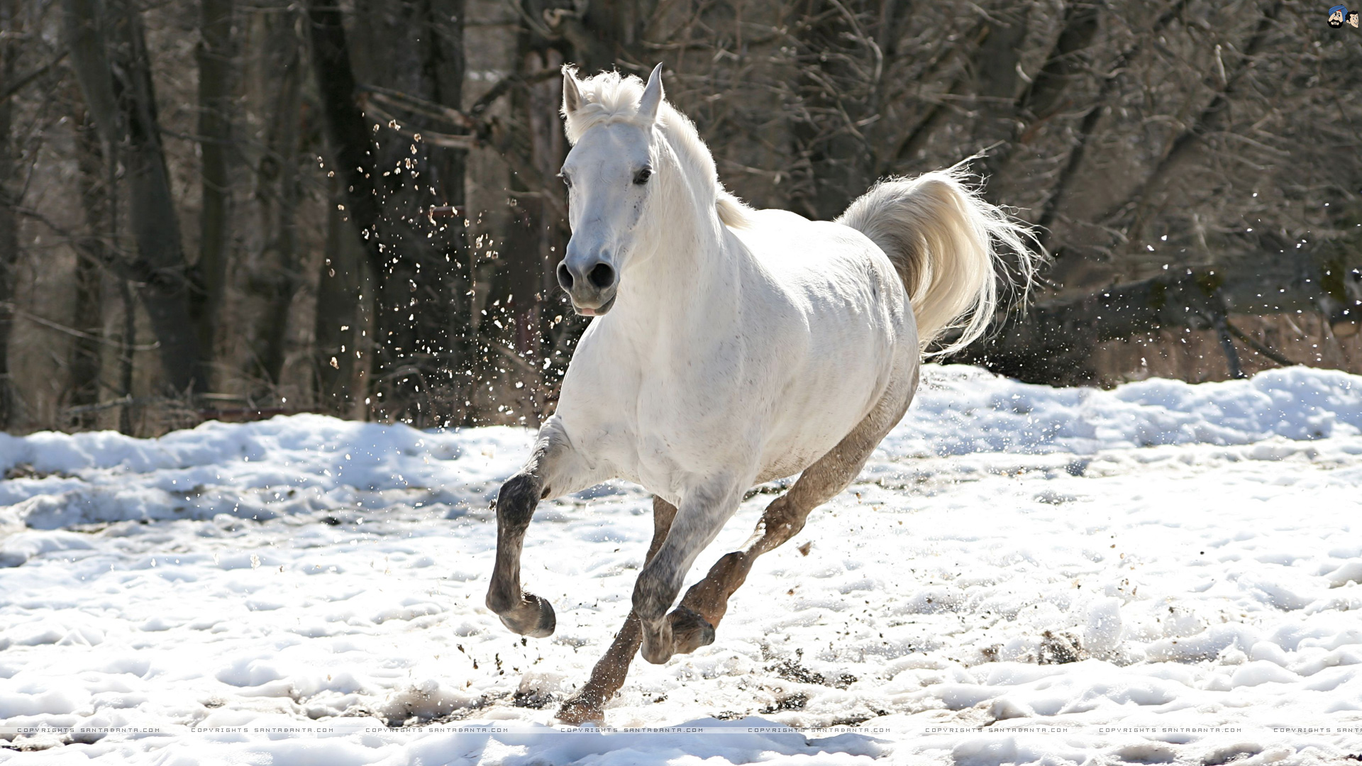 Horse animal facts and image wallpapers download.