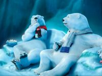 coca cola bear funny wallpaper collection
