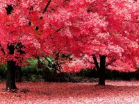 Beautiful Hd Red Scenery Wallpapers widescreen
