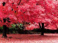 Beautiful Hd Red Scenery Wallpapers widescreen