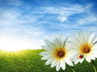 Beautiful Scenery Flower images free dwonload