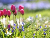 Beautiful Scenery Flower wide screen Wallpapers hd