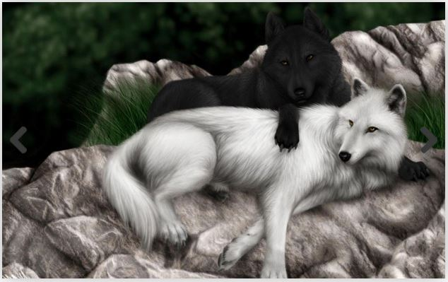 Beautiful Wolf Wallpaper Hd Hd Wallpaper