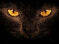 Black Lion Wallpapers Eye Hd Wallpaper