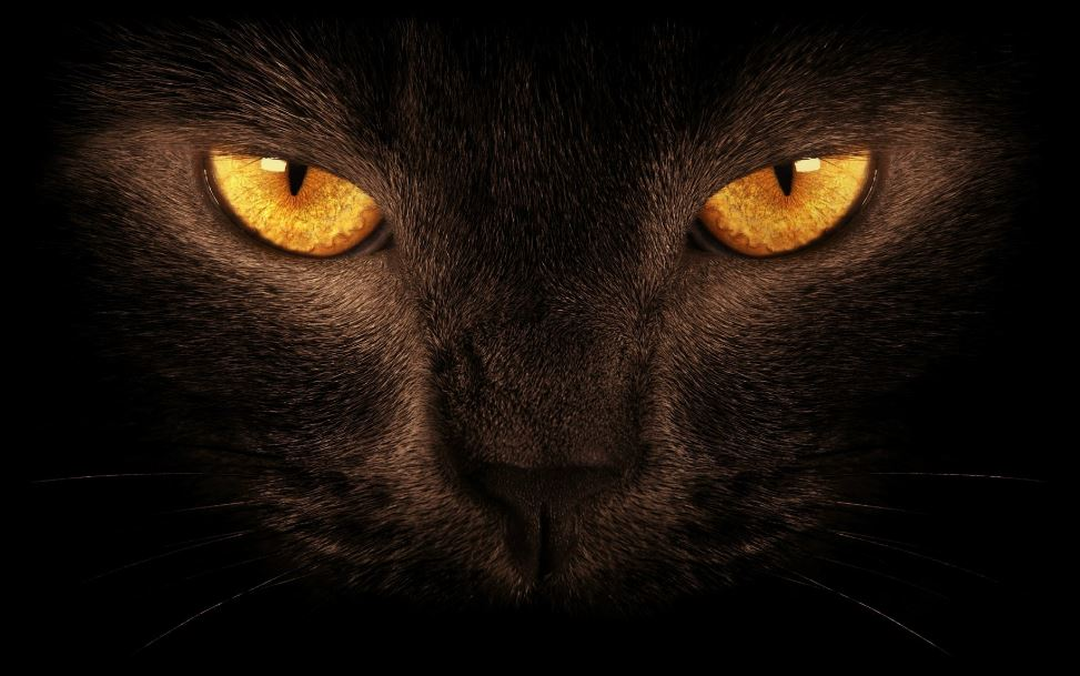 Black Lion Wallpapers Eye Hd Wallpaper