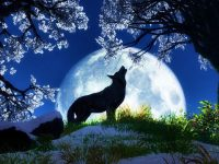 cool wolf wallpaper free download