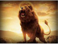 Lion Wallpapers Images hd Free Download for Desktop