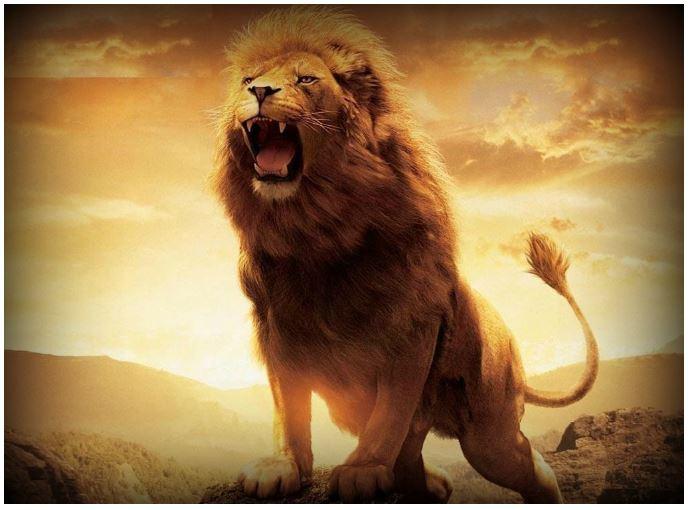 Lion Wallpapers Hd Wallpaper