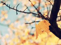 Autumn tumblr wallpaper hd