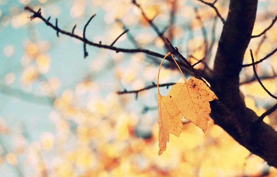 Autumn Tumblr Wallpaper Hd Hd Wallpaper