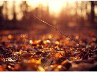 Autumn tumblr wallpapers hd