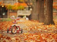 Autumn wallpaper 1080p download