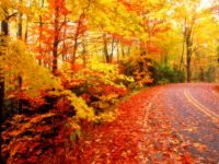 Autumn wallpaper hd