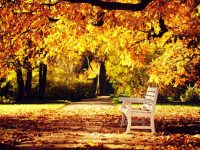 Desktop autumn nature wallpaper
