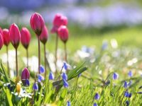 natural scenery wallpapers free download
