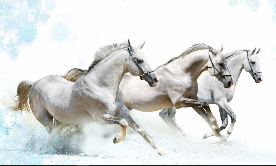 Running Horses HD Wallpaper