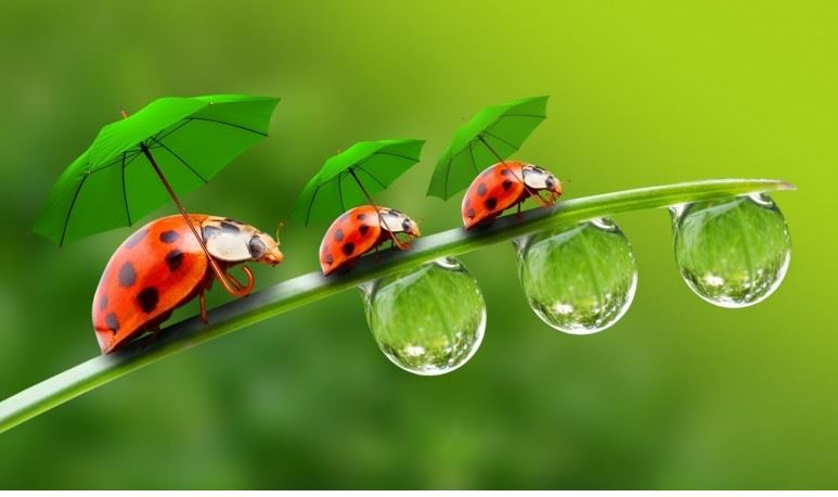 Awesome Ladybug Wallpaper