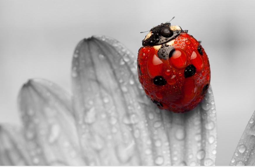 Cute ladybug wallpaper
