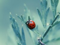Ladybug Wallpaper Free High Definition Download