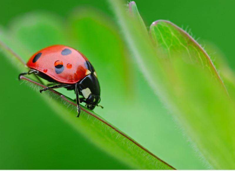 Ladybug wallpaper border