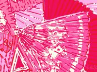 Lilly pulitzer hotinhere wallpaper