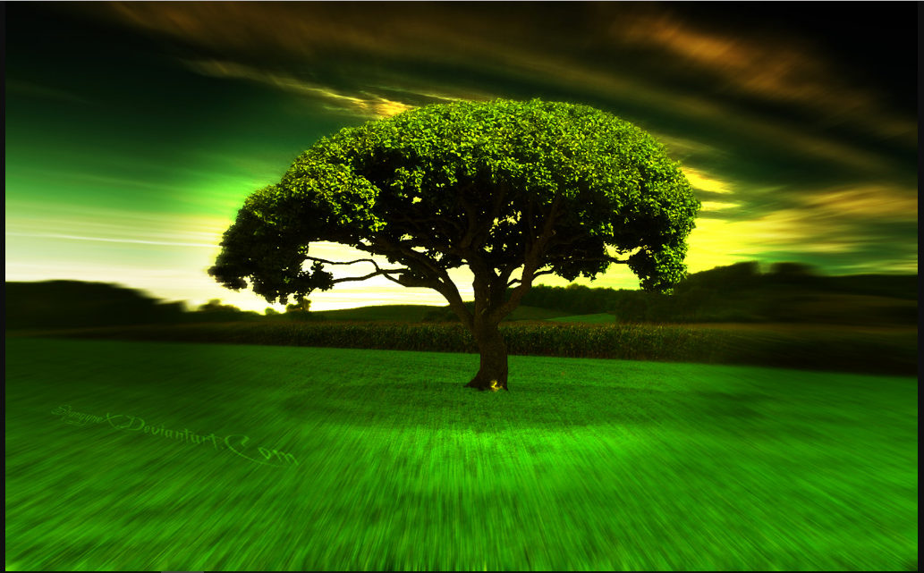 Tree Download backgrounds