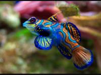 Exotic Fish wallpaper