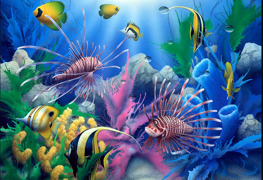 siamese fighting fish wallpaper