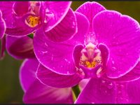 Beautiful orchid flowers wallpaper