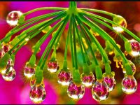 Dew Drop Background