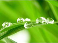 Dew Drops Live Wallpaper