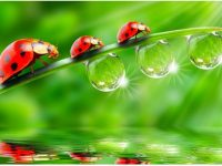 Dew Drops Wallpaper HD Download Background