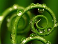 Leaf dew drops wallpaper