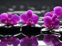 Purple Orchid Flower Background
