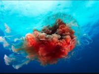 jellyfish phone wallpaper