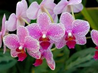 orchid flower images download