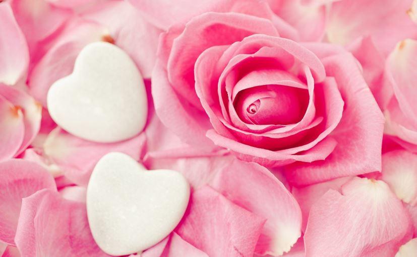 pink roses wallpaper iphone