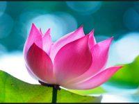 cool plumeria flower image