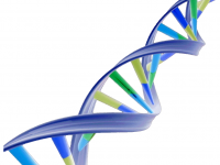 free dna images