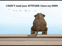 new positive attitude screen saver