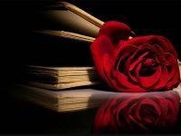 red rose wallpaper hd 1080p