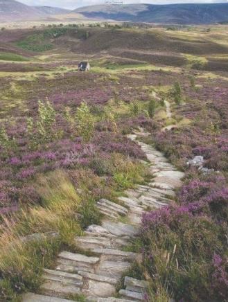 scottish highlands iphone wallpaper
