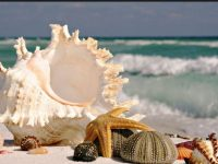 seashore shells wallpaper