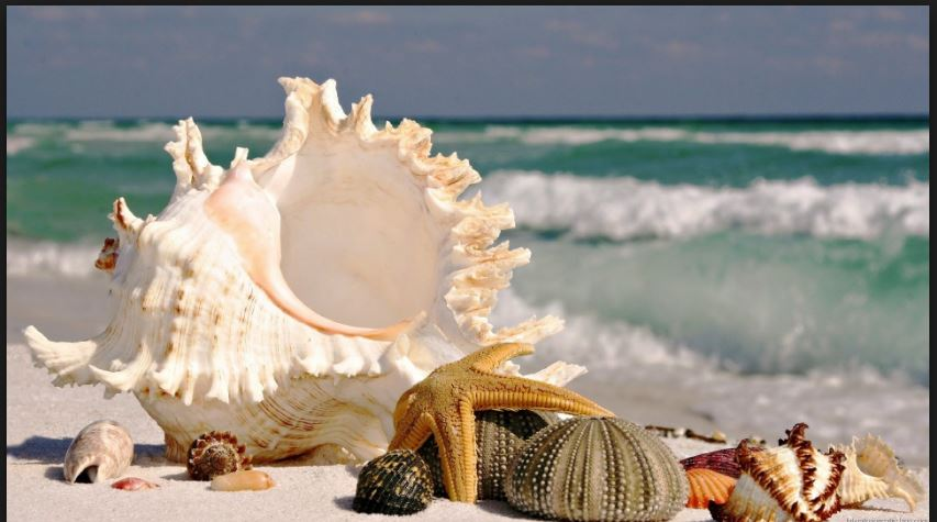 seashore shells wallpaper