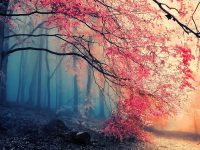 Tree fog nature beautiful
