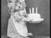 best cat birthday memes