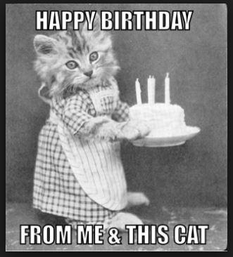 Black Cat Birthday Meme