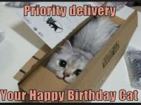 birthday cat funny