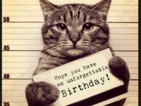 funny cat birthday pictures