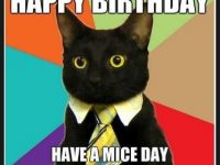 happy birthday cat images
